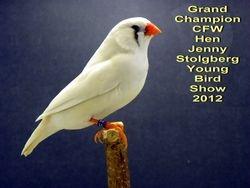 Grand Champion Chestnut Flanked White