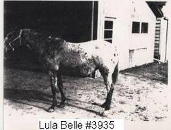 Lula Belle