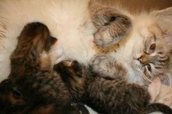 Kittens feeding-2 weeks old now