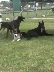 Nash, Diesel, Kye, and Chaos