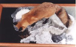 Coffee table fox