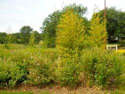 Villefrance de Panat Planting 'before'