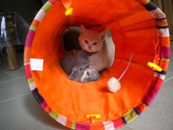 """We love play time"" in the tunnel"