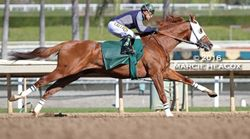 California Chrome Afternoon Workout