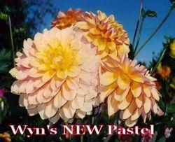 Wyn's NEW Pastel-A FD LtBl Pr/W