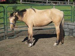 2008 dun filly