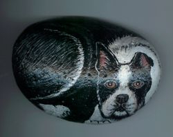 Boston Terrier Rock
