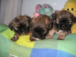 Angel and Freddie's first litter