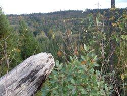 Little Qualicum River Valley