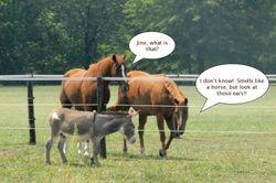 Donkeys Arrive!