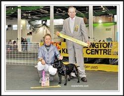 Wellington Kennel Centre 2012