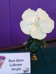BEST OPEN COLLECTOR - SINGLE - BYRON METTS - Cindy Erndt, Alvin, TX.