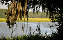 Wallace Creek