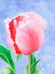 My Tulip 1