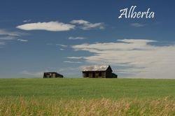 Alberta Barns