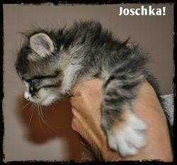 Joschka