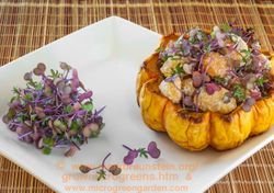RED RUSSIAN KALE microgreens & baked winter squash