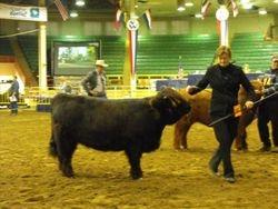 Sue Dyke leads out Almosta Farm;'s Hatti