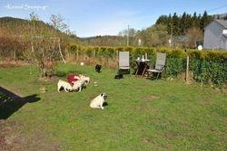 The Kennel Snowpug garden