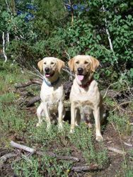 9-month-old Tess with Sunny on the Uncompahgre Plateau