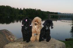 Alina, Bailey o Stina i Sveg.