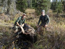 Enrico Rosa's Moose 2016