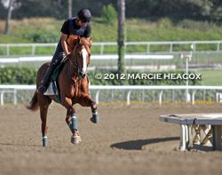 Lakerville Gallops