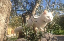 the refugee cat found courage on an olive tree root before finding family in N.Europe