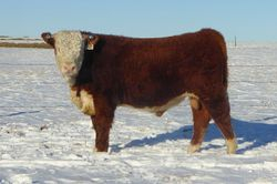 LOT 9   BR 15Z Extra Deep 26C