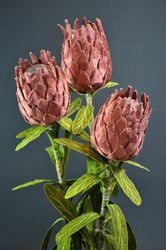 Pink protea