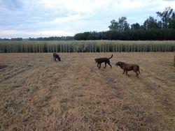 Harvest time walks