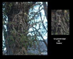 gardien de l'arbre