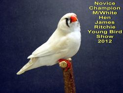 Novice Champion Marked White Hen