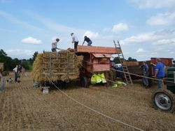 Threshing display