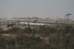 Gaza, over the tops of the eucalypts