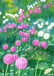 Big Alliums Field