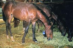 Yearling Filly 06/09
