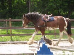 Reflection in Side Reins