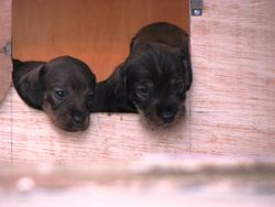 pups at door 2