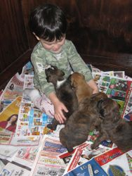 Our son with Ginger's litter
