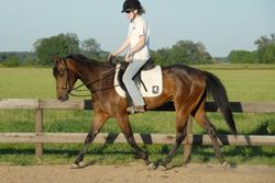 Jessie is by Jessie's Fancy Chip and out of EZ Rider, both with 65+ AQHA points in WP and HUS
