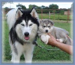 Zoey & Zorro
