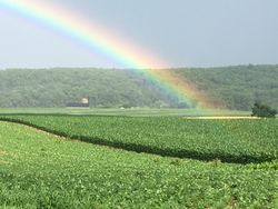 looking for a pot of gold?