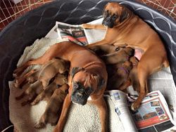 Rayne & her pups with Stassi the helper