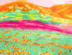 California Golden Poppies Field 1