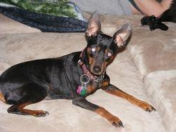 Pepper found her comfy spot!