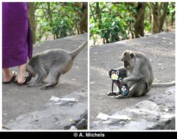 Stealing a flip-flop from a tourist