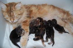 kattungene er en uke 4.3.11.