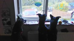 Waiting for the childen to come home