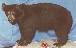 2 1/2 year old cub